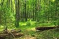 Cranberry Swamp Natural Area (30) (18094958551).jpg