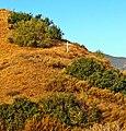 Cross, San Timoteyo Canyon 7-12 (17782717861).jpg