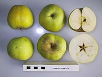 Cross section of Cornish Honeypin, National Fruit Collection (acc. 1955-078).jpg