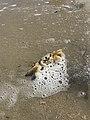 Crustaceo zoom.jpg