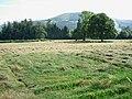 Cut grass - geograph.org.uk - 205212.jpg