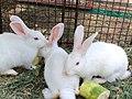 Cute Rabbits.jpg