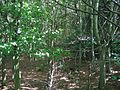 Dalmeny Park - geograph.org.uk - 34607.jpg