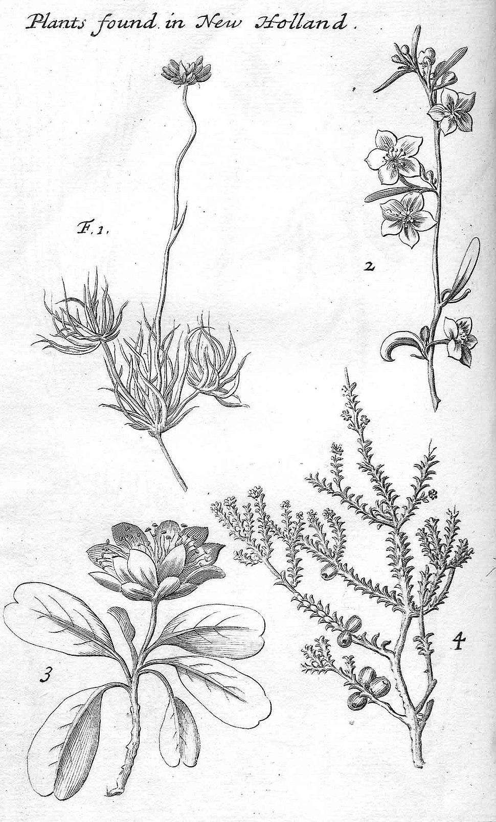 Dampier-New Holland plants