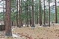 Davis Creek Park - panoramio (10).jpg