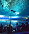 Den Bla Planet Danmarks akvarium 20130427 0391F (8709639645).jpg