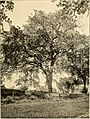 Descriptive guide to the grounds, buildings, and collections. Native trees of the Hudson River Valley (1909) (20692170240).jpg