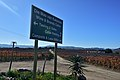 Die Mas vineyard, Wine Route, Upington, Northern Cape, South Africa (20350816520).jpg