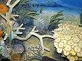 Diorama of a Devonian seafloor - Goldringia nautiloid cephalopod, corals, trilobites, algae (45654171641).jpg