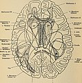 Diseases of the nervous system - a text-book of neurology and psychiatry (1915) (14782512192).jpg