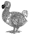 Dodo (PSF).png