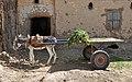 Donkey cart R01.jpg