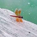 Draganfly.jpg