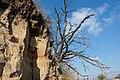 Dry tree - panoramio.jpg