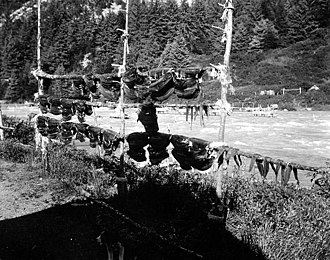 Chilkoot River - Salmon drying on fish racks along the Chilkoot River, August 1911