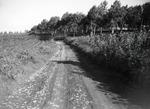 ETH-BIB-Naturstrasse mit Heuschreckenschwarm zwischen Landwirtschaftsland und Plantage-Kilimanjaroflug 1929-30-LBS MH02-07-0249.tif