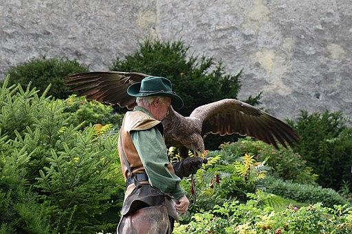 Eagle gets dinner (24941451283)