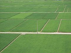 Echigo plain paddy fields