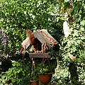 Eichhörnchen in einem Futterhaus.jpg