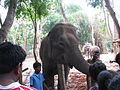 Elephant and rides on it at Bannerghatta National Park 4-24-2011 1-02-42 PM.JPG