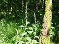 Eltenberg PM15-01.jpg