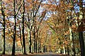Entrance lane with nice oaktrees at Hoge Veluwe Schaarsbergen - panoramio.jpg