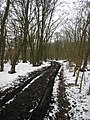 Essex Way, Copperas Wood, west of Harwich. - panoramio.jpg