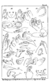 Ethnological Studies Among the North-West Central Queensland Aborigines - Plate III - Sign language.png
