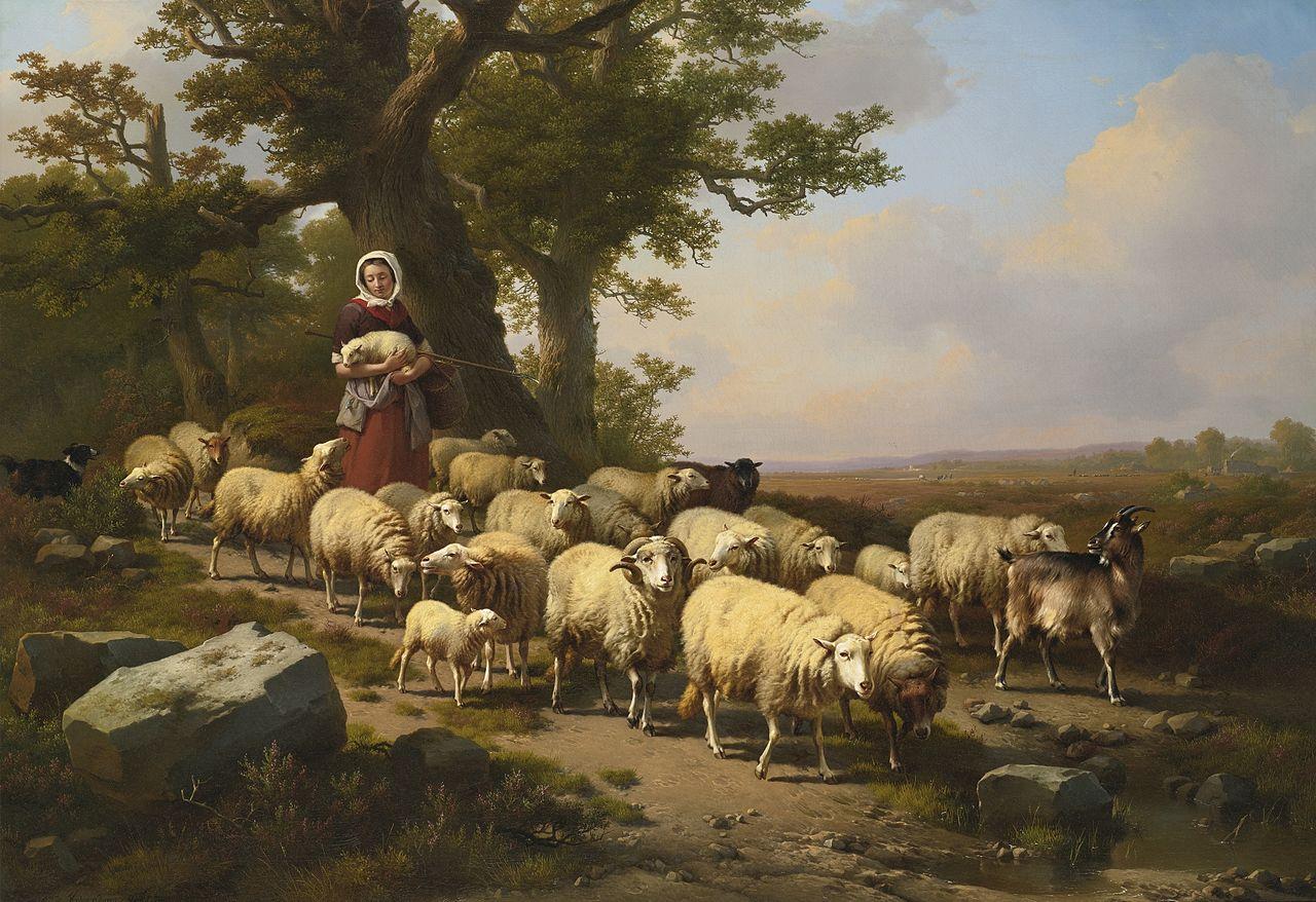 Troupeau Moutons
