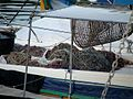 FISHING NETS (4145211282).jpg