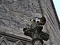 Falco peregrinus St John's Church Bath 5.jpg
