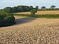 Farmland, Cerne Abbas - geograph.org.uk - 539875.jpg