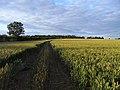 Farmland, Stanton St John - geograph.org.uk - 1589594.jpg