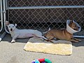 Fence Factory Pet Adoptions - panoramio (1).jpg