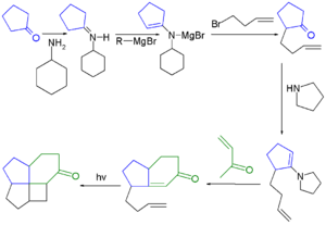 Fenestrane - Fenestrane synthesis 1972