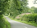 Fental Lane from Old Wells Road - geograph.org.uk - 1435967.jpg