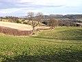 Fields near Houtley Farm - geograph.org.uk - 1135701.jpg