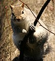 Flickr - law keven - I'm NOT coming down...till you show me some nuts^....jpg