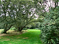 Flickr - ronsaunders47 - DISTANT BENCH. WARRINGTON CHESHIRE UK..jpg
