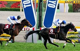 Flora Stakes - 2008 Flora Stakes