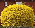 Flower 2393-2.jpg