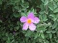 Flower Power ^2 - geograph.org.uk - 1467219.jpg