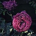 Flower With Nice Petals (210849475).jpeg