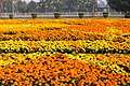Flower exhibition gulshan iqbal park.jpg