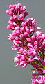 Flower show II (2587948992).jpg