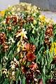 Flowers Near Google (140472653).jpeg