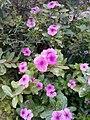 Flowers of Baghdad 14.jpg