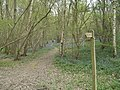 Footpath through Spring wood - geograph.org.uk - 403861.jpg
