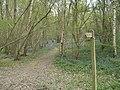 Footpath through Spring wood - geograph.org.uk - 403861.jpg