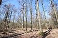 Forêt Départementale de Beauplan à Saint-Rémy-lès-Chevreuse le 14 mars 2018 - 06.jpg